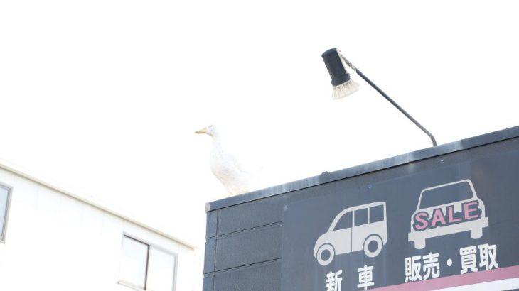 良い天気日は洗車日和ですね!!